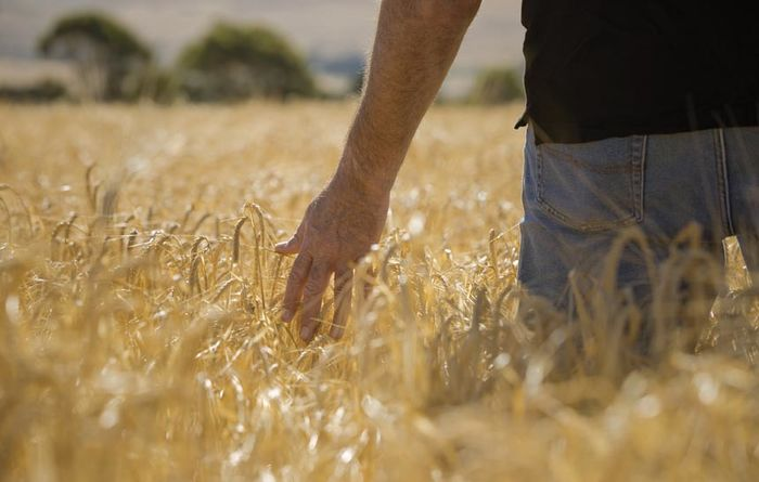 Below average rainfall and the Aussie dollar hit farming