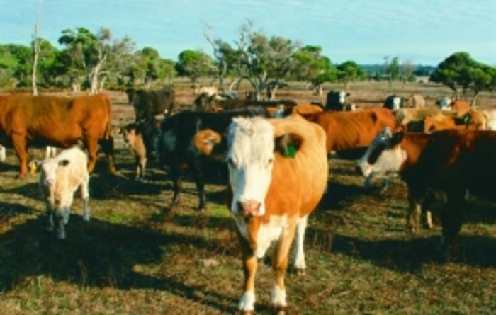Cattle die as farmers can't afford feed
