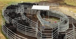 Cattle yards are an important part of farm safety and animal welfare