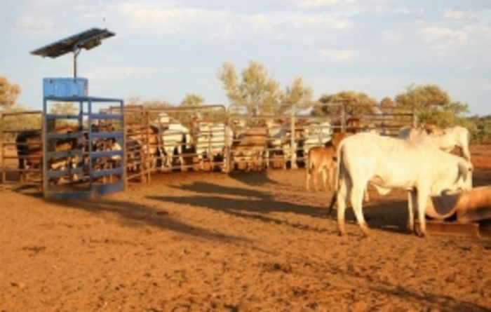 NT cattle stations managed from space in global first