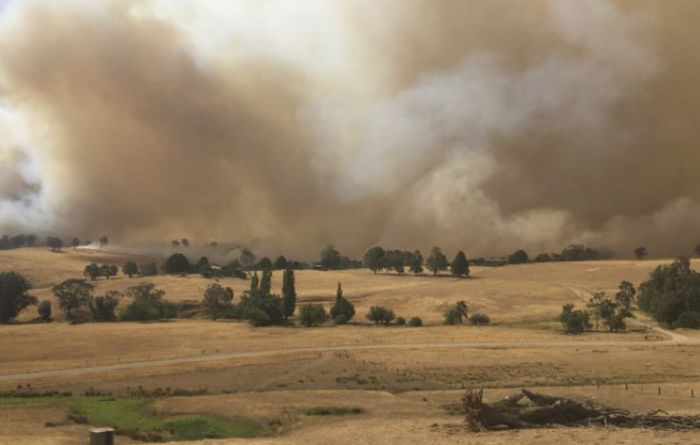 Bushfire Agency established to help recovery