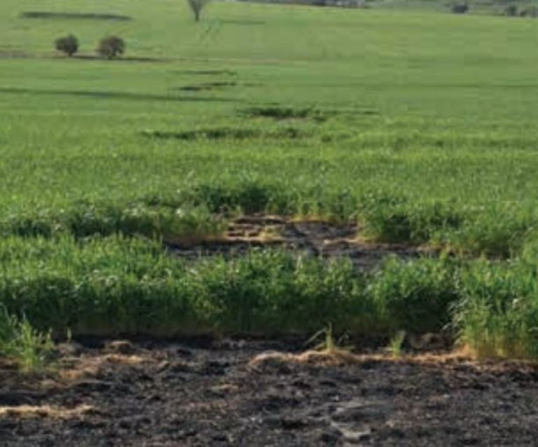 Research Report: Beating herbicide resistant weeds