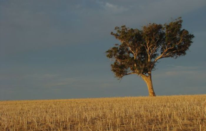 Act now before drought hits: CEDA